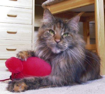 Image of Apanatchee of Chamberlain of Yankee Cats